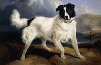 A portrait of Neptune sir edwin landseer