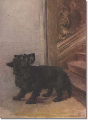 Black scottish terrier by Maud Earl