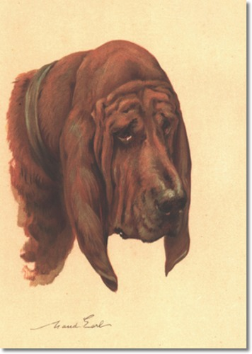 Bloodhound  by Maud Earl