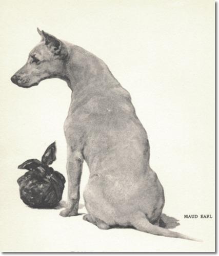 Bull terrier  by Maud Earl