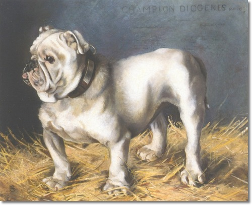 Bulldog Diogenes by Maud Earl