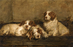 Clumber spaniels in a kennel john emms