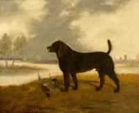 Cooper edwin portrait of a water spaniel with dead