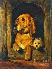 Dignity and impudence sir edwin henry landseer