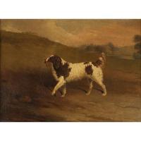 Edwin cooper 1785 1833 english water spaniel
