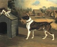 Edwin cooper dog frightening a cat on a kennel roof