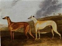 Edwin Cooper greyhounds