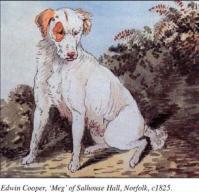 Edwin cooper Meg 1825