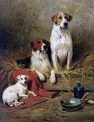 Foxhounds and a terrier john emms