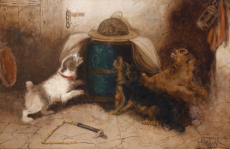 George Armfield three dogs barking at a mouse