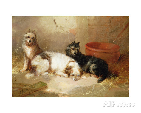 George Armfield three terriers
