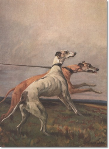 Greyhounds by Maud Earl
