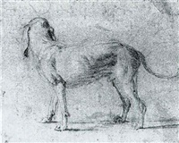Jan fyt study of a dog