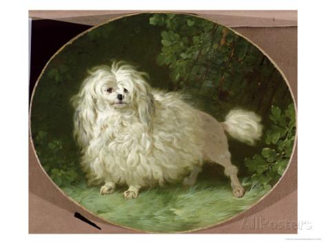 Jean jacques bachelier 1724-1806 portrait of a poodle