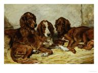 John emms shot and his friends three irish red and white setters 1876