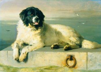 Landseer distinguished