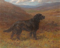 Maud Earl a flat coat retriever in a moorland landscape