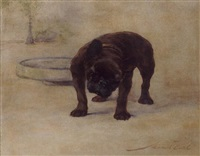 Maud Earl french bulldog champion dinnette