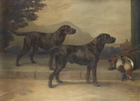 Maud Earl labrador retrievers field trial champion peter of whitmore and champion type of whitmore