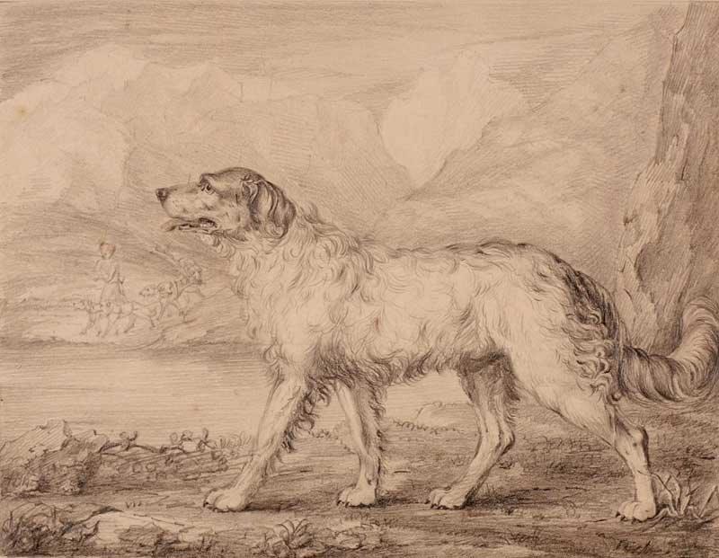 Newfoundland dog Philip Reinagle 1749-1833