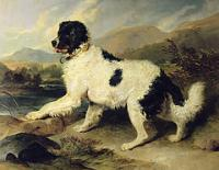 Newfoundland dog called Lion sir edwin landseer