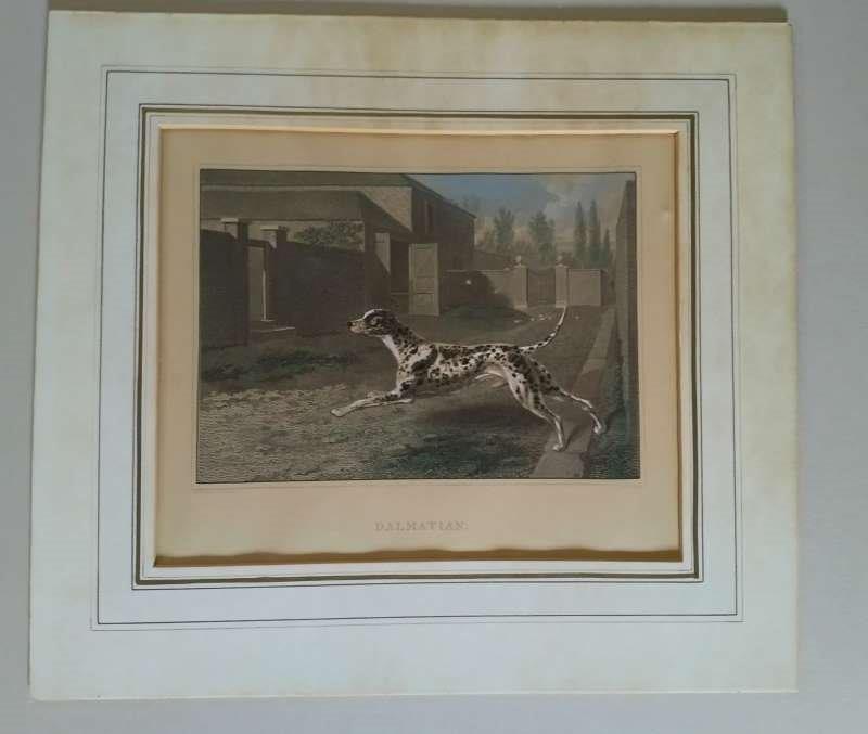 Dalmatien Philip Reinagle 1749-1833