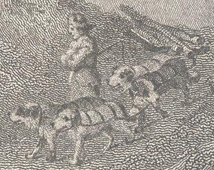 Newfoundland dogs Philip Reinagle  1776-1859