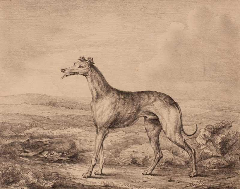Philip Reinagle 1749-1833 Greyhound major