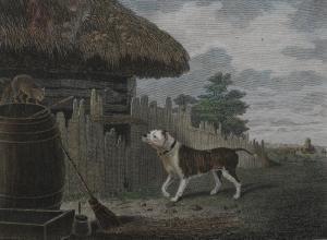 Philip reinagle philip bull dog om7c1300 10478 20170907 srmor10105 48