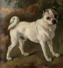 Thomas Gainsborough     A pug     1752